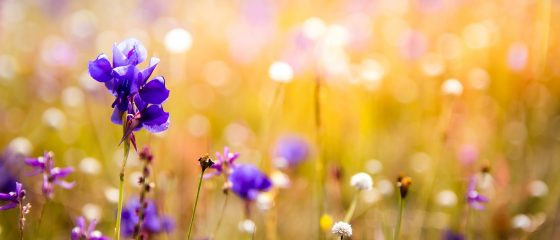 flowers-3182324_1920